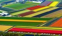 Dutch kaleidoscopic tulip fields