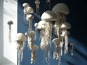 porcelain jellyfish