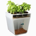 Self Cleaning Fish Tank Garden by Back To The Roots