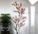 Indoor cherry blossom