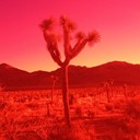 Joshua Tree by Michele Ouellet