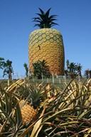 The Big Pineapple, near Port Alfred, South Africa