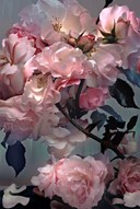 Rose by Nick Knight, 2008  SHOWstudio  Shop