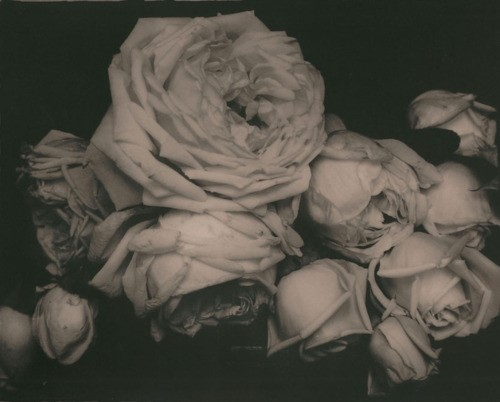 Heavy Roses, Voulangis, France (1914) photographed by Edward Steichen