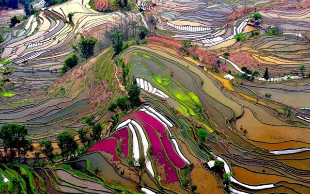 Rice Field Terraces in Yunnan China