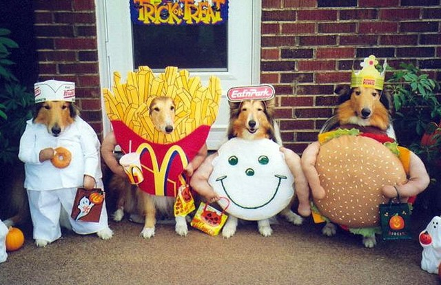 Loldogs – fancy dress outfits for dogs