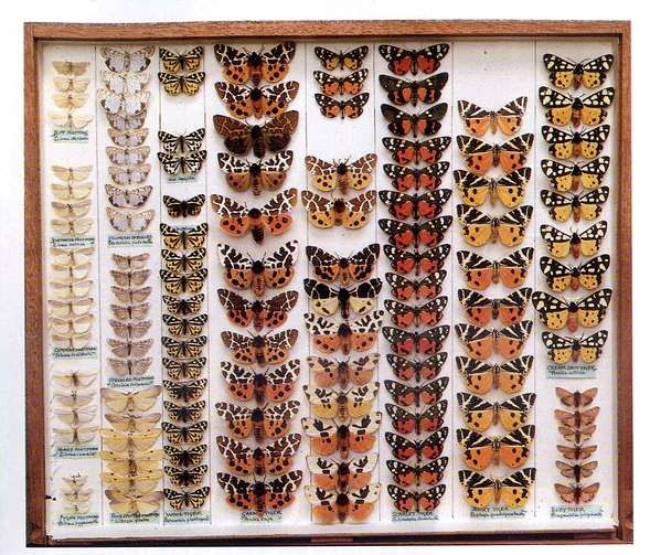 A Victoria collectors drawer of Tiger Moths
