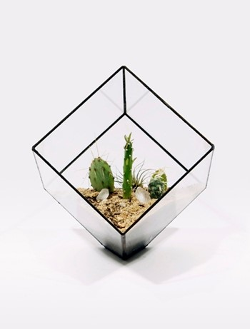 Terrariums and Planters by Score and Solder