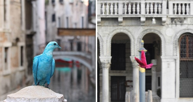 colorful pigeons at the Venice Biennale