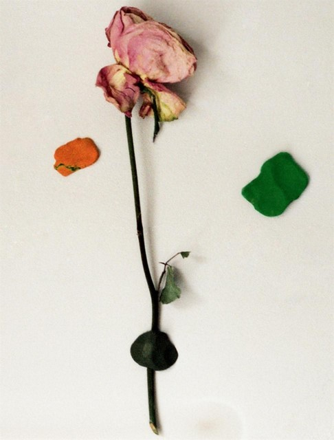A rose on the wall.
