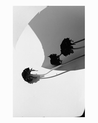 Zoe Ghertner, New York Flowers