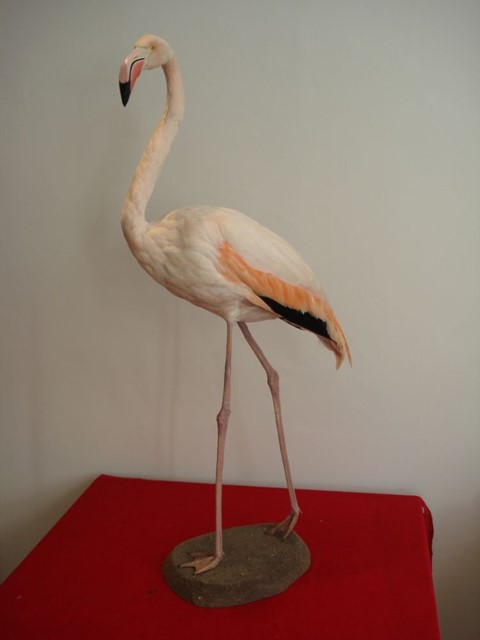 Taxidermy Flamingo from The Last Tuesday Society