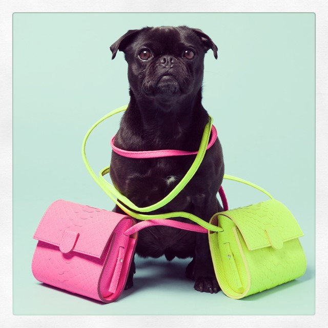 Nina Peter Python Box Bags, as seen on Pepper the pug-terrier