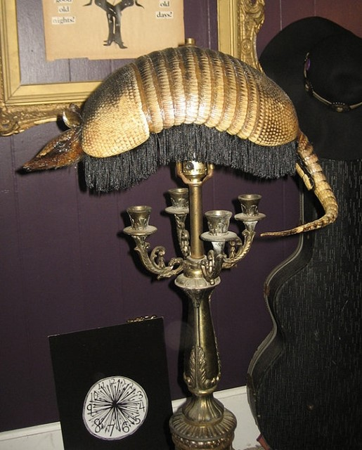 Taxidermy Armadillo Lamp