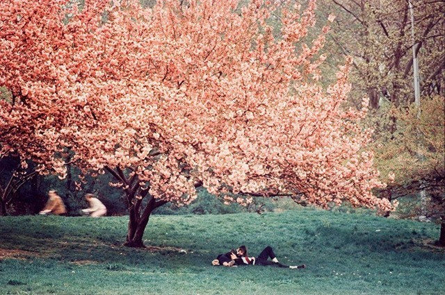Central Park, Spring, 1970 by Ernst Haas