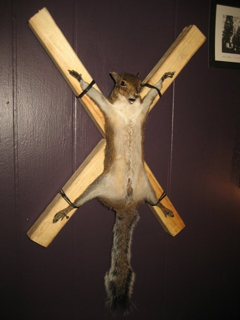 Taxidermy Bondage Squirrel