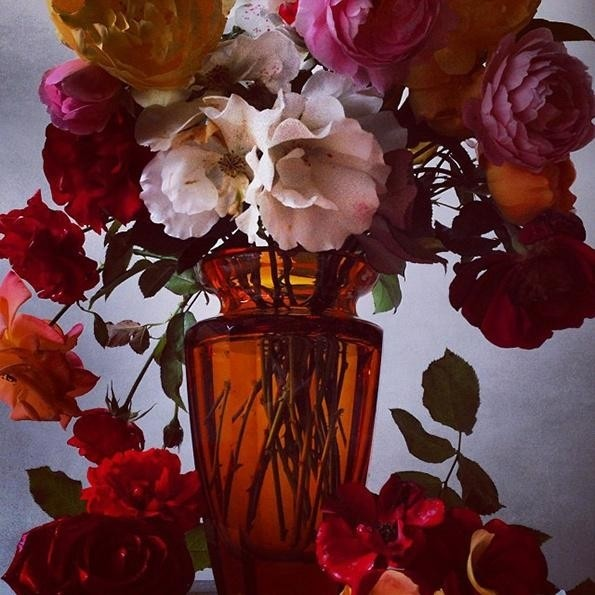 Flowers by Nick Knight