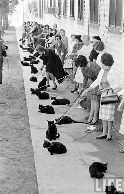 Hollywood Audition for Black Cats 1961