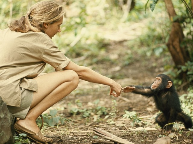 Jane Goodall and Flint, 1965