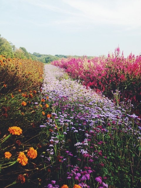 A field of wild flowers