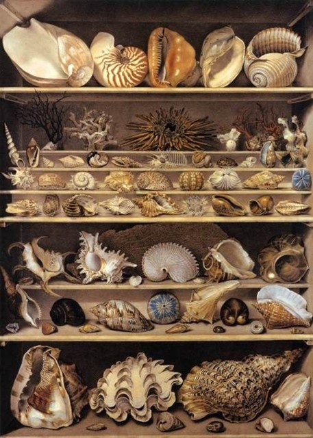 A collection of shells by Alexandre-Isidore Leroy de Barbe (1777-1828)