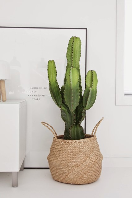 A cactus in a basket