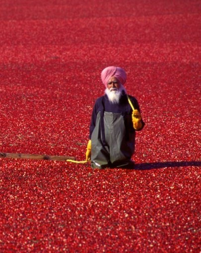 Cranberries from India