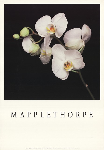 Robert Mapplethorpe Orchids Poster (1989)