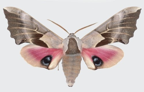 Joseph Scheer Moth photography