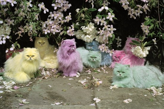 Pastel Cats by Tim Walker