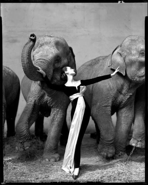 Richard Avedon's Dovima with elephant